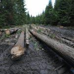 Зменшення лісового фонду. Доброгостів