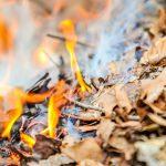 Наші вчинки впливають на інших людей або чому не варто палити сухе листя