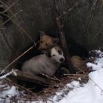 У Дрогобичі рятувальники витягали двох собак з колодязя (ФОТО)