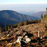 Кримінальна відповідальність за знищення лісів: розмір істотної шкоди знизили з двох млн до 20 тис. грн