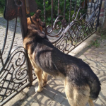 На Стрийщині рятувальники визволяли собаку, який застряг у брамі