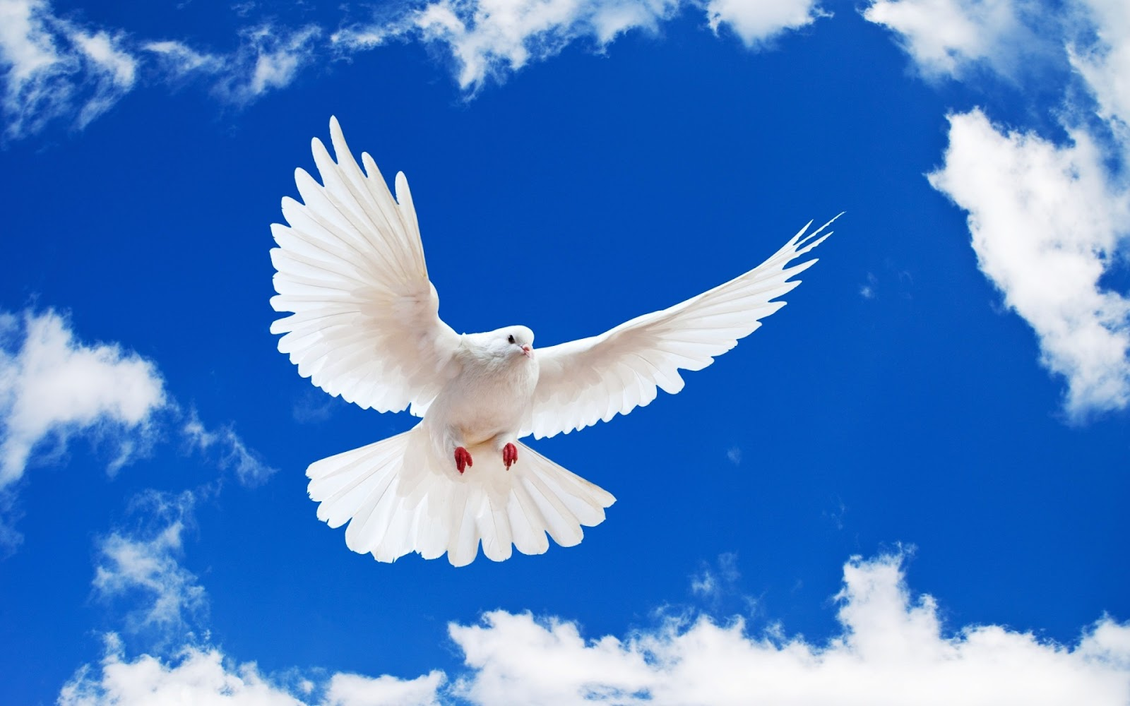 hd-achtergrond-met-witte-duif-en-blauwe-lucht.jpg