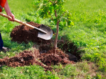 У Дрогобицькій громаді до дня міста посадять 930 дерев